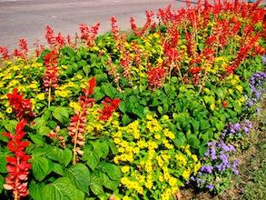 Red Yellow Purple Flowers