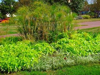 Green Flower bed