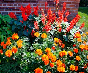 Orange Red Flowers