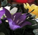 Purple Yellow White Still Life