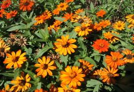 Pella Flowers