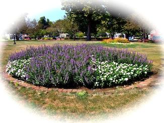 Central Park Pella Flowers