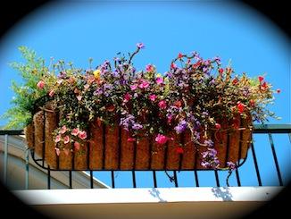 flowers planter